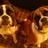 Archie & Alfie