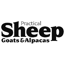 @Practical_Sheep