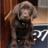 Jasmine Lab Puppy