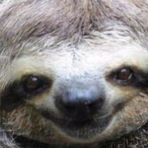 Funny sloth pictures funnyslothpics twitter - Funny sloth pics ...