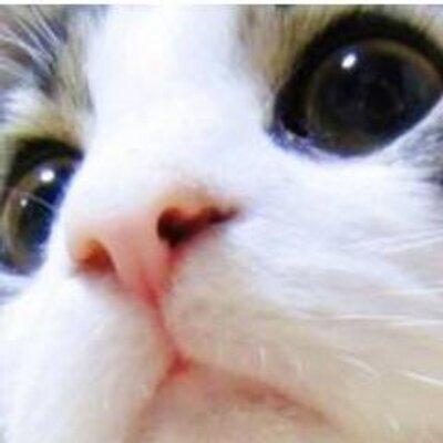 かわいい猫ちゃん画像館