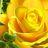tthomas4mvp avatar