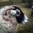 Hill Top Farm (@hilltopfarmgirl) Twitter profile photo