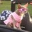 April Fieno twitter profile