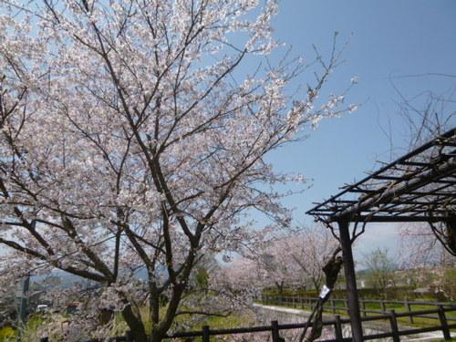 姥桜 (@tomosugi60) | Twitter