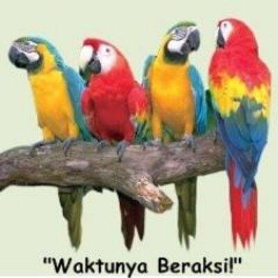 Burung Beo Burungbeoo Twitter