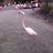 Frau Flamingo
