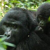 Arch Safaris Uganda