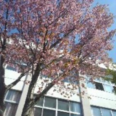 苫小牧高等商業学校