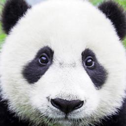 Panda V5spanda Twitter