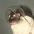 sugarkat