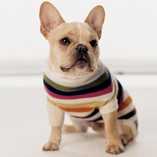 Knitting Patterns For Bulldog Sweaters : Dogs in Sweaters (@dogsinsweaters) Twitter