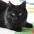 浦安市の猫を売らない猫の店『猫の館ME』おーにゃー