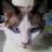 sevenyritch63's avatar