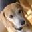 mocha_mill avatar