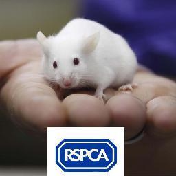 RSPCA - Lab Animals