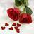 薔薇の棘bot