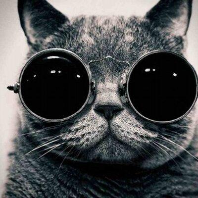 Unduh 101+ Gambar Kucing Gaul Terbaru Gratis