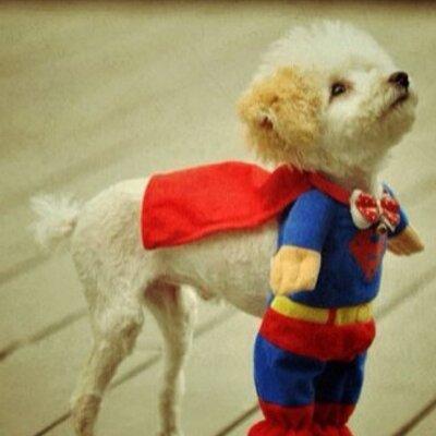 Dressed Up Pups At Dresseduppups Twitter