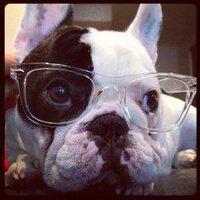 Manny The Frenchie | Social Profile