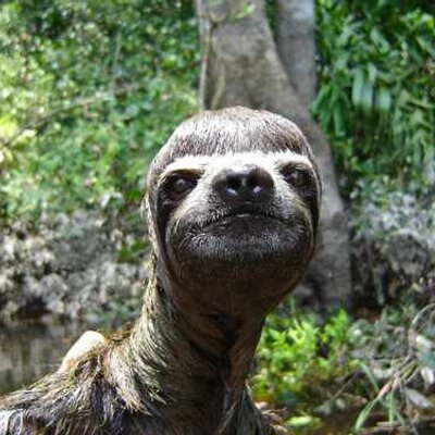 Funny sloth dude on twitter igetannoyedwhenpeople dont give head - Funny sloth pics ...