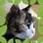 cattail0212