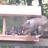mtn_squirrel