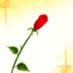 @desert_rose550