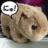 wombat_death
