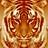 Cymatickot