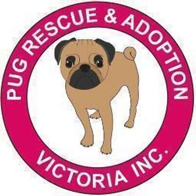 Pug Rescue Victoria At Pugrescuevic Twitter