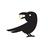 lucky_crow
