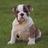 blamehound