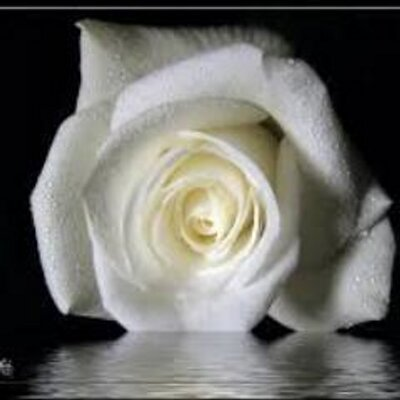 Fleur Blanche Fleur S3 Twitter