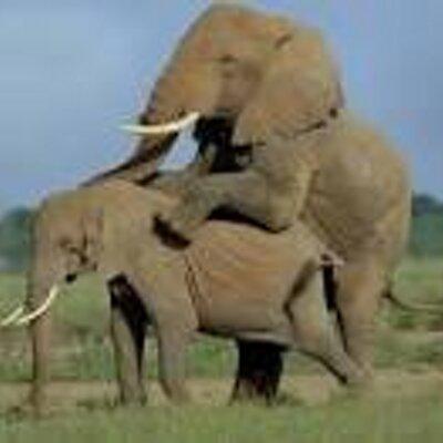 Unduh 67 Koleksi Gambar Gajah Bengkak Paling Baru Gratis HD
