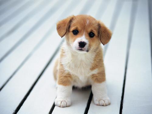 B b chien unbebechien twitter - Image bebe chien ...