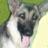Heidi's Legacy Dog Rescue