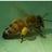Ogunquit Honey Bees
