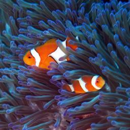 Temple Adventures Mysterious Beauty Scuba Diving Padi Ocean India Uwphotography Dsd Anemone Templeadventures Reef Padi