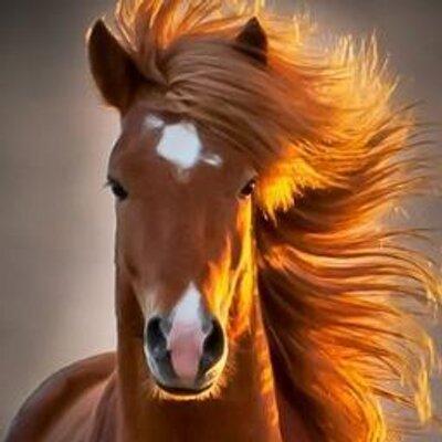 Amo Meu Cavalo At Amomeucavalo Twitter