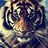 @willyblueyz Profile picture