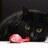 黒猫bot