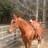 HorseguyTLH