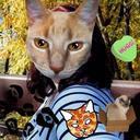 @cat_hugs