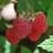 WesterwayRaspberries