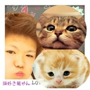 進撃の猫好き龍やん (@0216Ryuji) Twitter