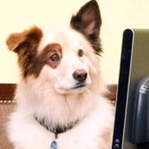 Stan Dog Wit Da Blog At Lilmoesly Twitter