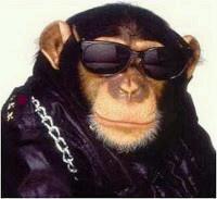 Download 101+ Gambar Monyet Gaul Paling Baru Gratis