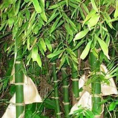 Jardin de bambu jardin bambu twitter - Jardin de bambu talavera ...