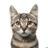 Blank_cat_rip